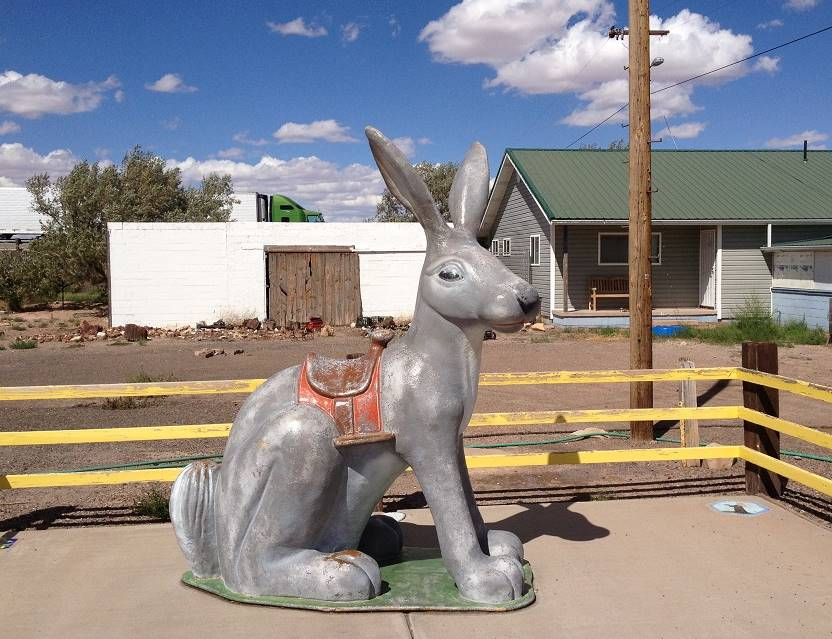 giant rabbit in Joseph City AZ