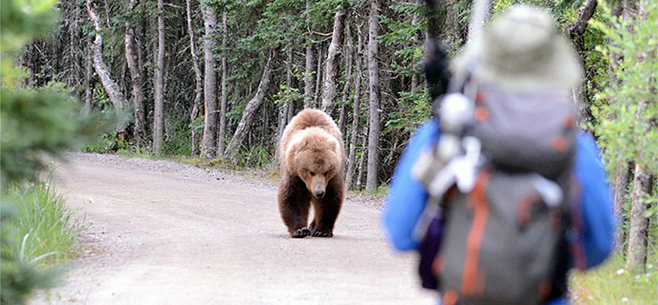 Bear and human in national Park