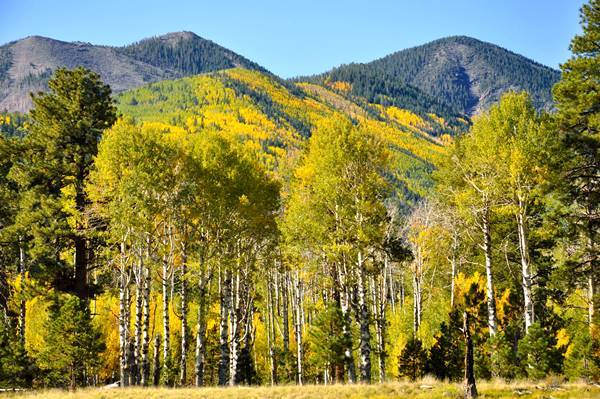 Lockett Meadow, Coconino National Forest, near Flagstaff AZ<