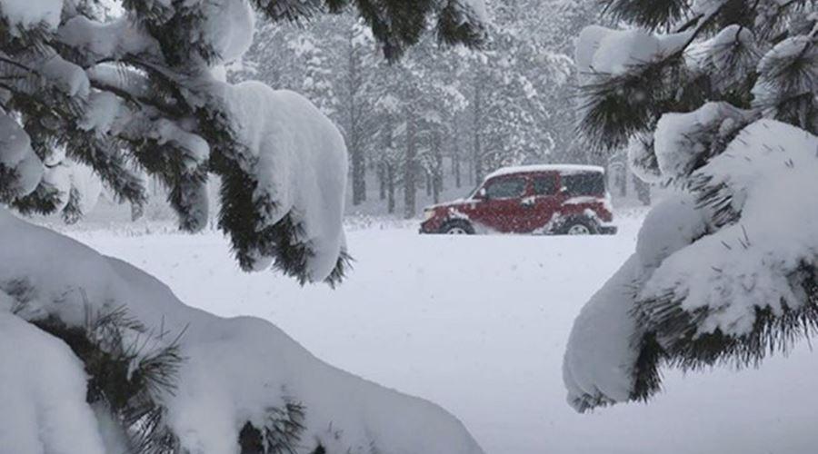 car on Route 66 amid snowed pine trees