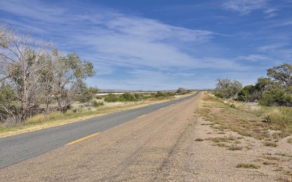 Trees and the roadway of Route 66